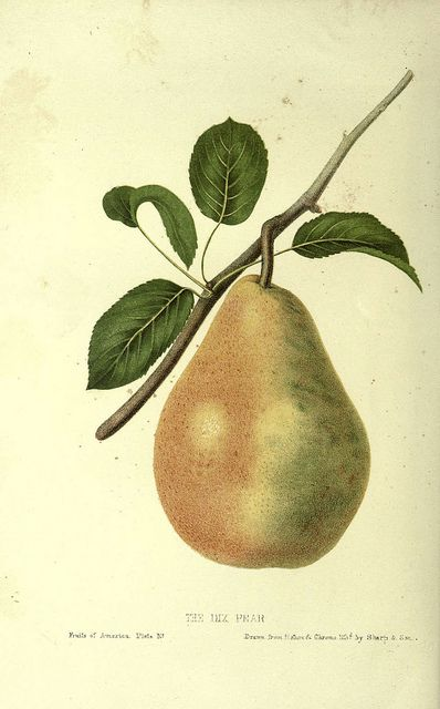 Mikiya pear fruit 54 years old even if it rots sea bream e