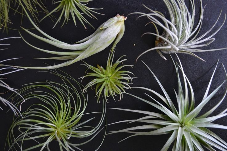 How to care for and display air plants