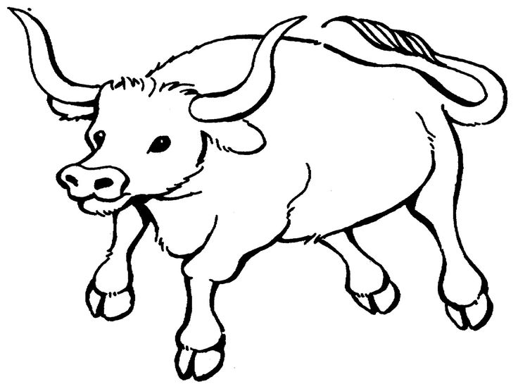 Bull Printable Coloring Pages - http://www.kidscp.com/bull-printable-coloring-pages/?Pinterest