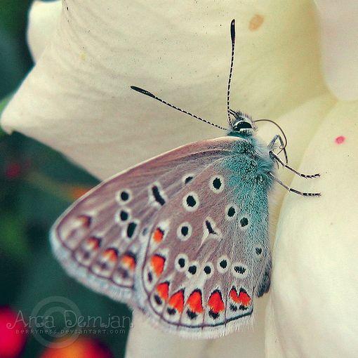 Beautiful!Butterflies Dragonflies, Beautiful Butterflies, Lost Butterflies, Art Prints, Insects Butterflies Oth, Butterflies Moth, Butterflies Art, Brows Deviantart, Brows Photography