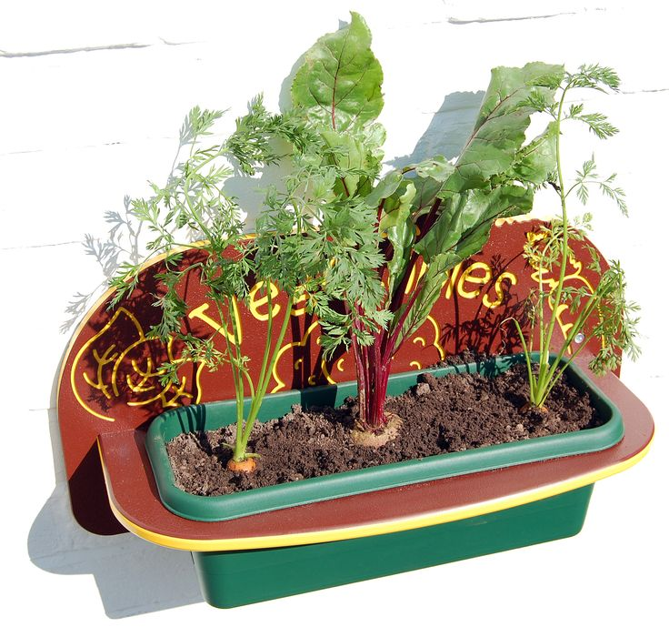 Planters are perfect for vegetables.