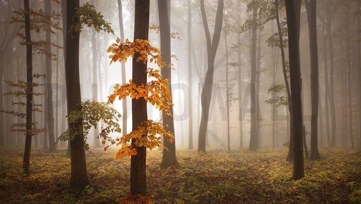 In November Light - Fototapeter & Tapeter - Photowall