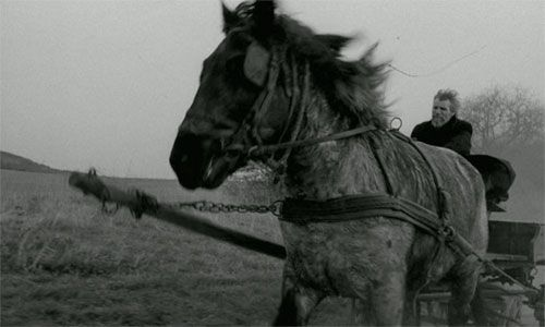El caballo de Turín