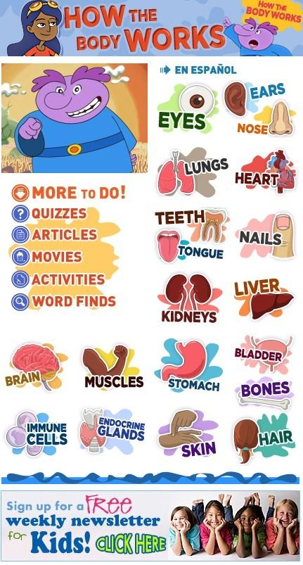 185 best life: human body & cells images on pinterest   human body, Muscles