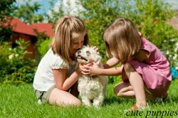 Fantastic and lovely pictures of cute puppies, cute dogs,  dog pictures, puppy images free.