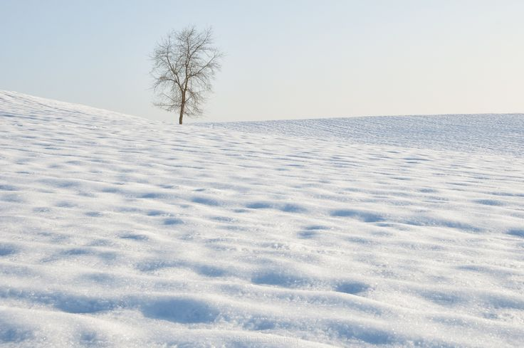 Snow by Asier Montoia on 500px