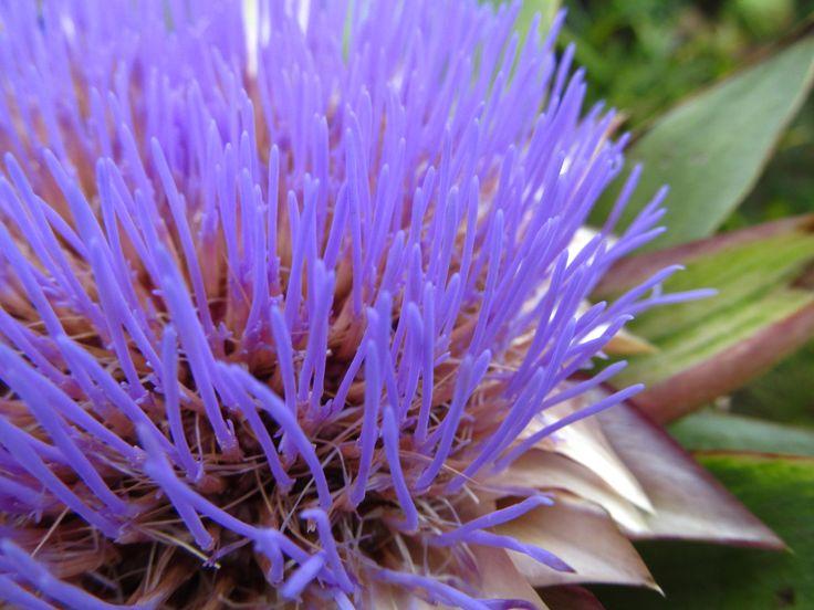Hermosa planta capturada en un paseo.