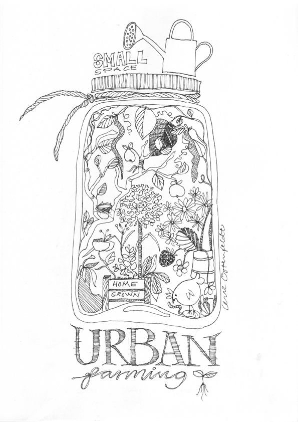 Even the smallest garden can grow something to put on a jar ... from my sketchbook / illustration Lene Ostenfeldt