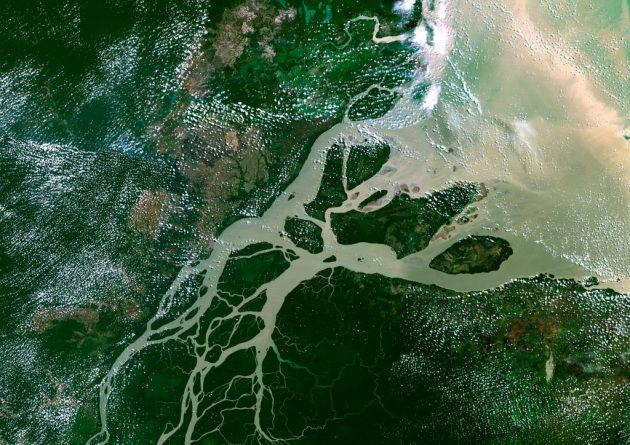 L'hanno scoperta oceanologi statunitensi e brasiliani alle foci del fiume, dove le acque dolci e fangose si tuffano nell'Atlantico. Lunga 1000 km, fa da ponte tra reef sudamericani e caraibici.