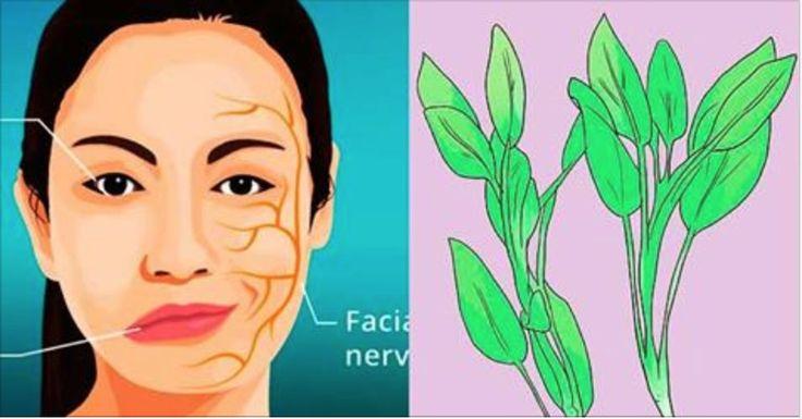 Esta erva faz muitos milagres - ferva e cure o reumatismo, a tosse, bronquite, feridas e melhore a circulação! | Cura pela Natureza