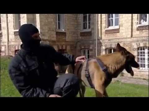 REPLAY TV - ** REPORTAGE RAID ET CHIENS unité d'élite police nationale Brigade ** - http://teleprogrammetv.com/reportage-raid-et-chiens-unite-delite-police-nationale-brigade/
