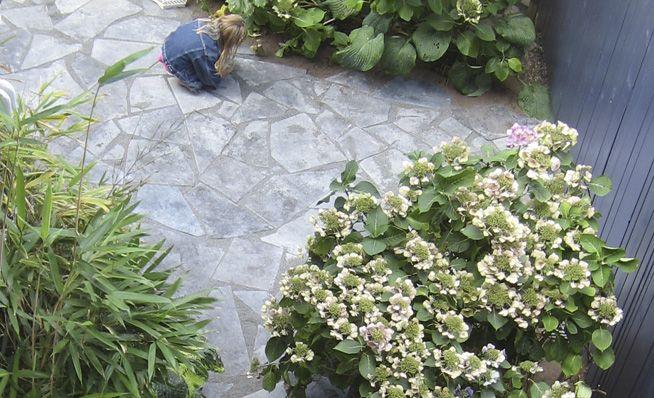 Loos van Vliet - Flower Garden, Haarlem