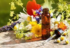 Hmm...  Detox - Entgiften Sie Ihren Körper mit Heilpflanzen: Es gibt verschiedene Heilpflanzen, um den Körper zu entgiften. Wichtig ist stets, möglichst alle Entgiftungs- bzw Ausscheidungsorgane anzusprechen, also Leber, Niere, Darm, Lymphe und evtl. die Haut.