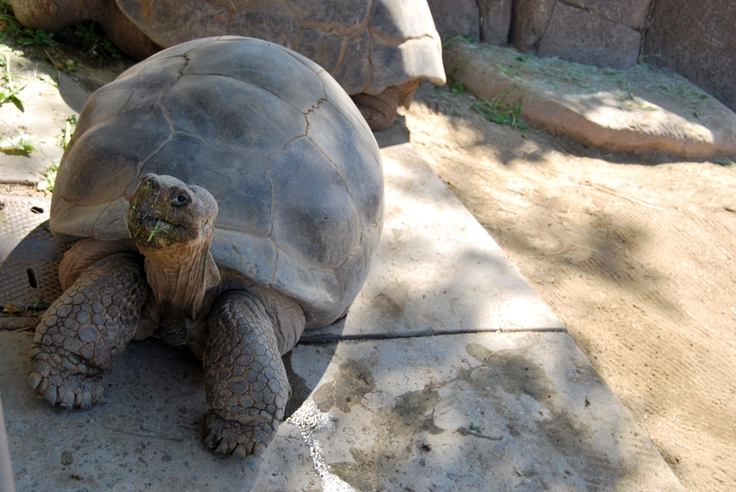 Places to eat near turtle back zoo / Local phone voucher code