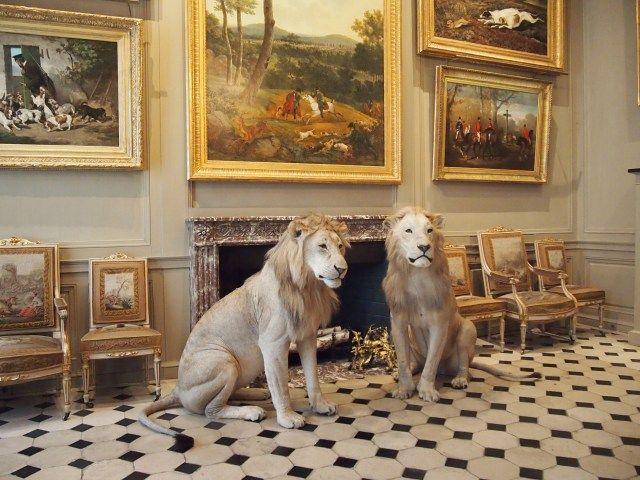 Taxidermy Lions