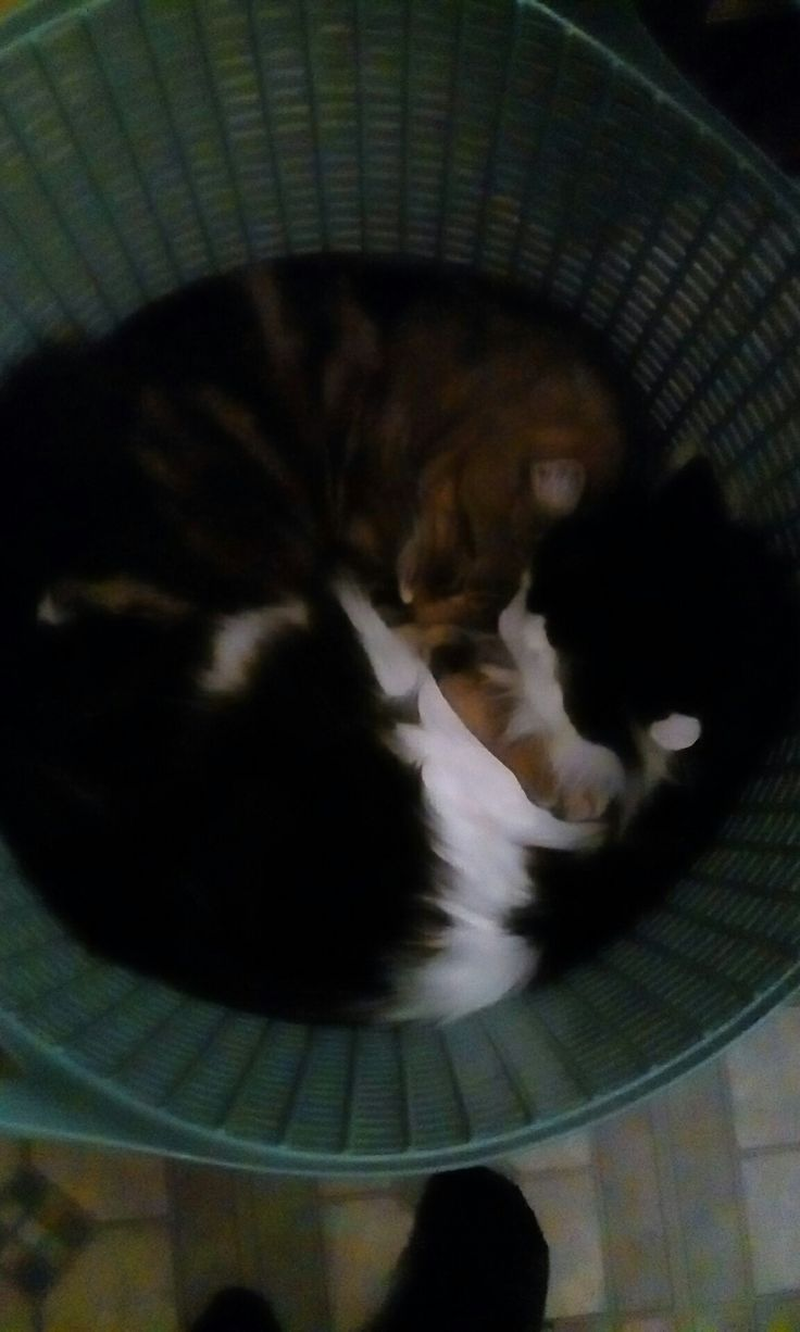 My cats look like ying and yang😂