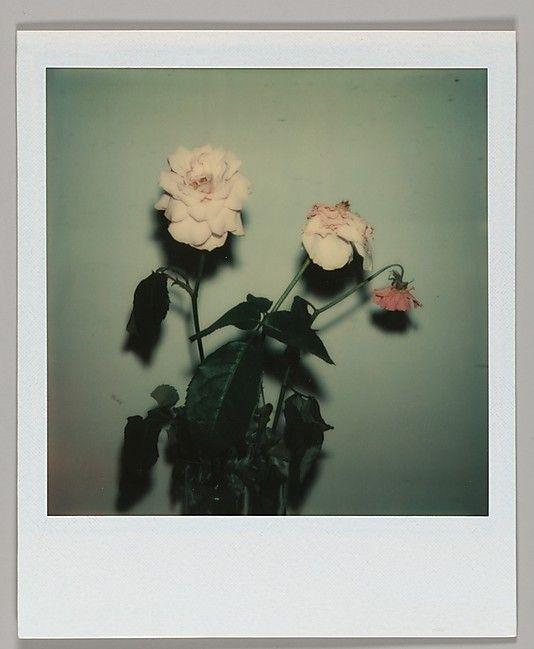[Floral Still-Life]Walker Evans (American, St. Louis, Missouri 1903–1975 New Haven, Connecticut)