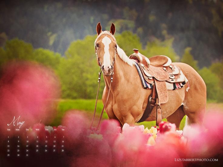waiting for Mom: Horses Rid, Horses Beautiful, Pretty Ponies, Horses Equestrian, Horses 3, Westerns Palomino, Pretty Horses, Finest Hors, Hors 3