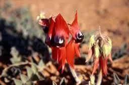 Image result for australian desert animals