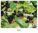 Mulberry is known for it's edible fruit.But it's leaves are the only feed of the silkworms (Bombyx mori ).