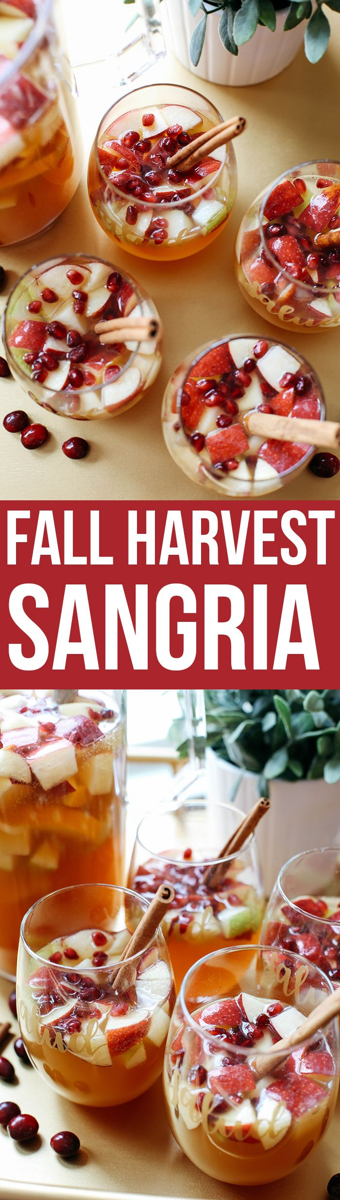 This Fall Harvest Sangria is the perfect holiday cocktail filled with crisp apples, pears, cranberries, cinnamon sticks and fresh apple cider!