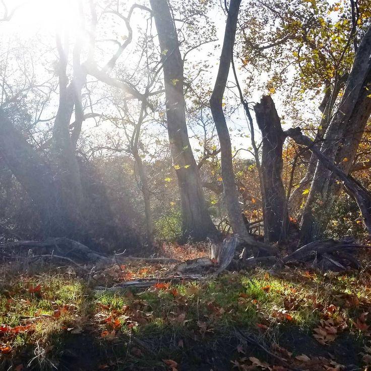 """Calienta mi alma Y borra mi dolor Con tu luz traes la vida Con tu calor das amor."" --#Ozomatli ----- #trailrunning #sundayvibes #morning #traillove #flow #dowhatyoulike #natureheals #universejuice #METs #solarpower #zenwolf"