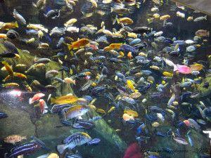O maior aquário do mundo - Aquário de Georgia