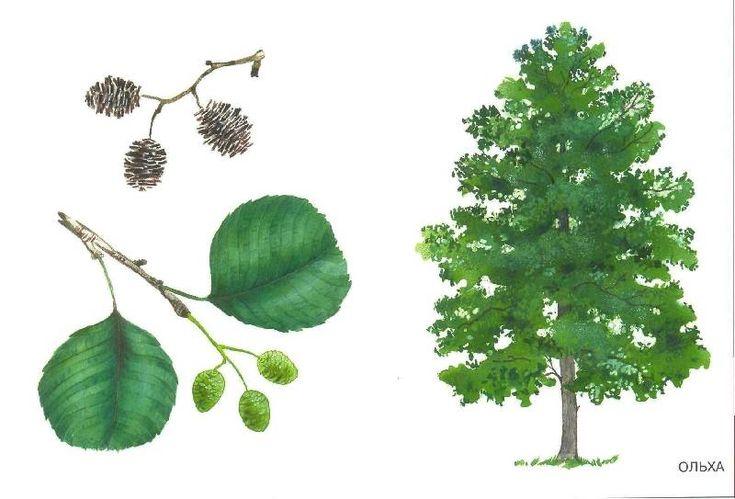 leppä 1) Lisää puiden kuvia https://fi.pinterest.com/eMHa22/gif-stromy/