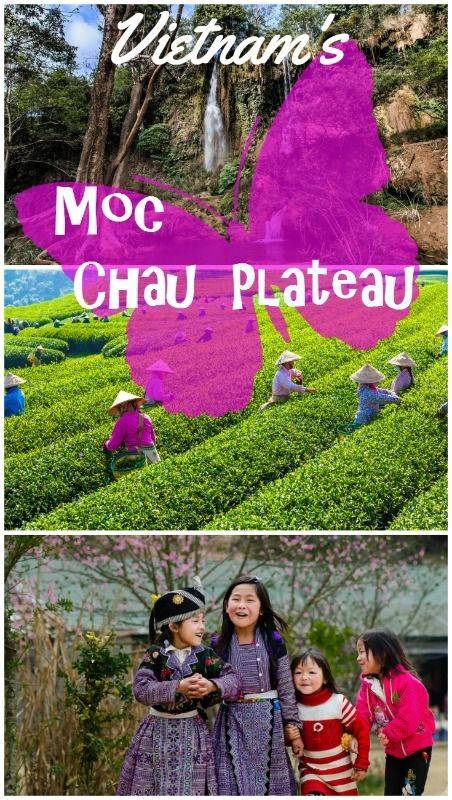Moc Chau Plateau is a beautiful mountainous region in Northern Vietnam rich in culture, history and scenery.