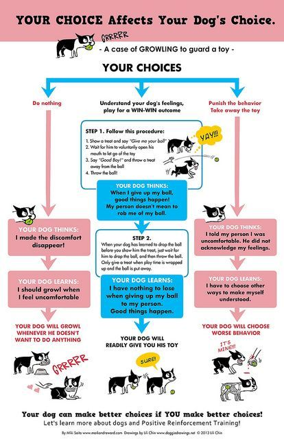 How your choices affect your dog's behavior | YOUR CHOICE - Growling by lili.chin, via Flickr