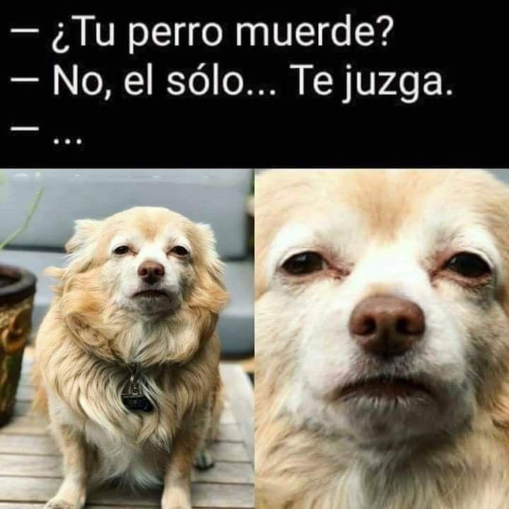 Pin De Angela Bustamante En Humor Memes Perros Memes Divertidos Memes Graciosos