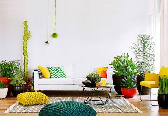 plantsGreen Thumb, Colors Pop, Green Interiors, Cacti Garden, Outdoor Living Patios, Citrus Colors, White Wall, Indoor Plants, Colorful Interiors