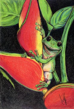 """Green Tree Frog and Flower"" Coloured Pencil Drawing"