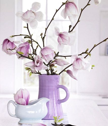 Magnolias / photo by Anke Schütz via livingathome
