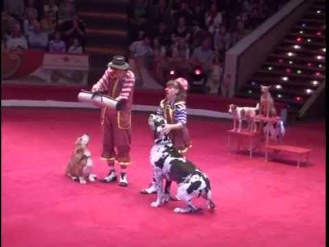 Yakuboskie.ru DogShow Clowns with dogs Moscow Circus Клоуны с собачками
