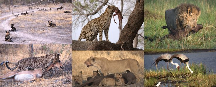 Wildlife at Chitabe Camp, Okavango Delta
