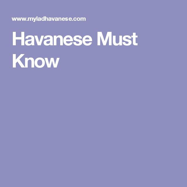 Havanese Must Know