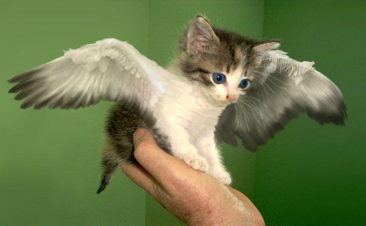 кошачий ангел фото подарок