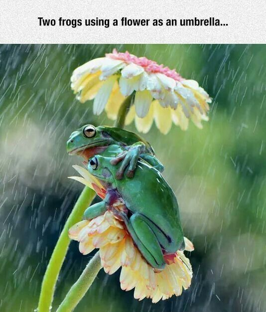 Frogs in a storm