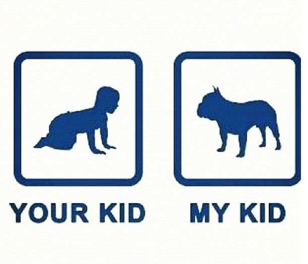 Yes French bulldog love