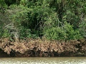 A marca de onde a água chegou ficou marcada na vegetação da beira da lagoa. (Foto: Reprodução / TV Gazeta)
