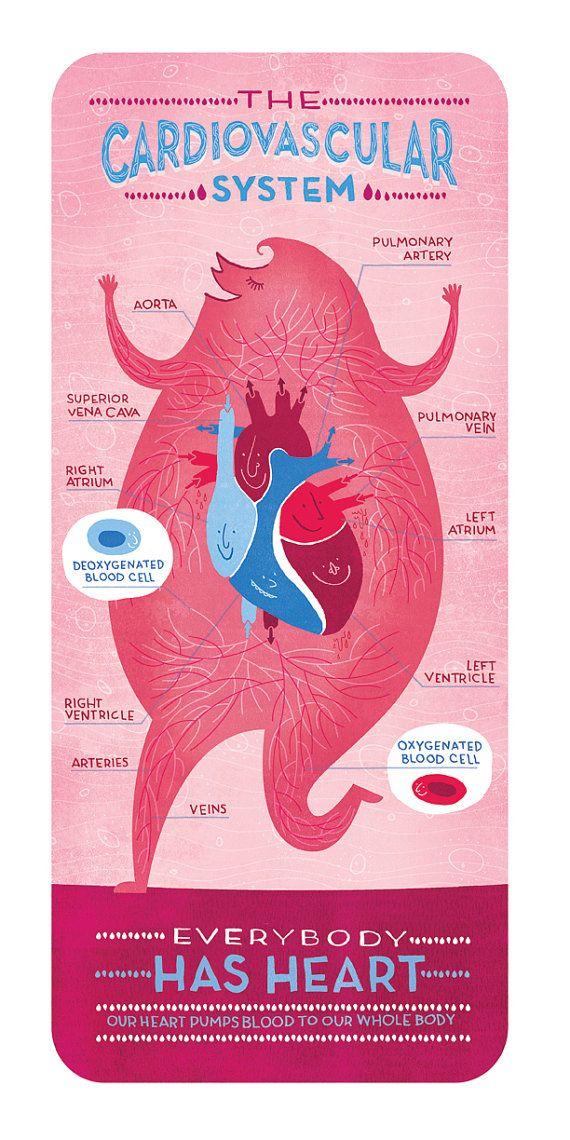 El cartel de sistema Cardiovascular por Rachelignotofsky en Etsy