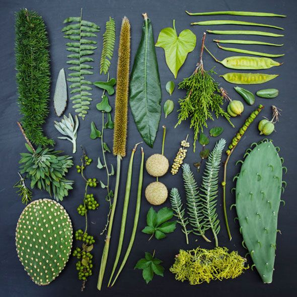 Green shades: The Garden Collection by Emily Blincoe l #leaves #styling