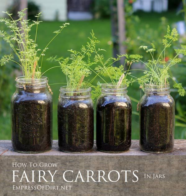how to grow carrots melbourne