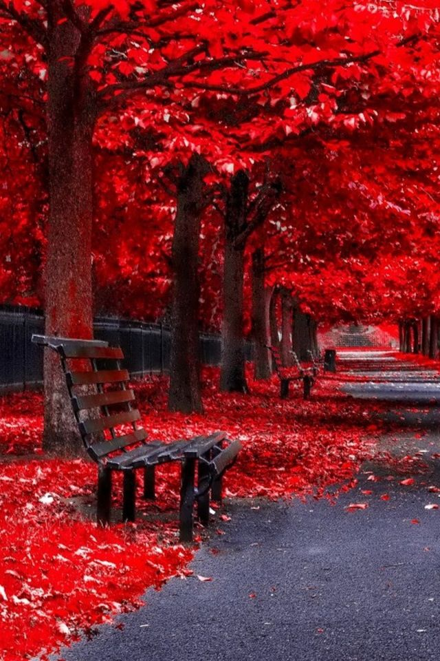 Red Trees Fall Autumn Pinterest Autumn Scenery And Park