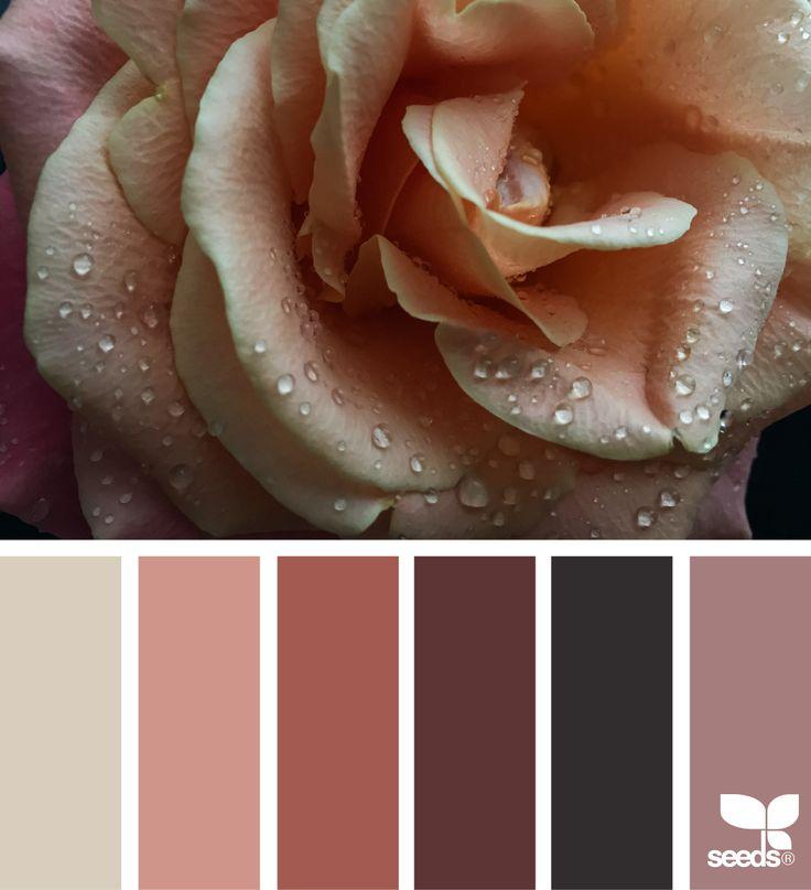 color dew | design seeds | Bloglovin'