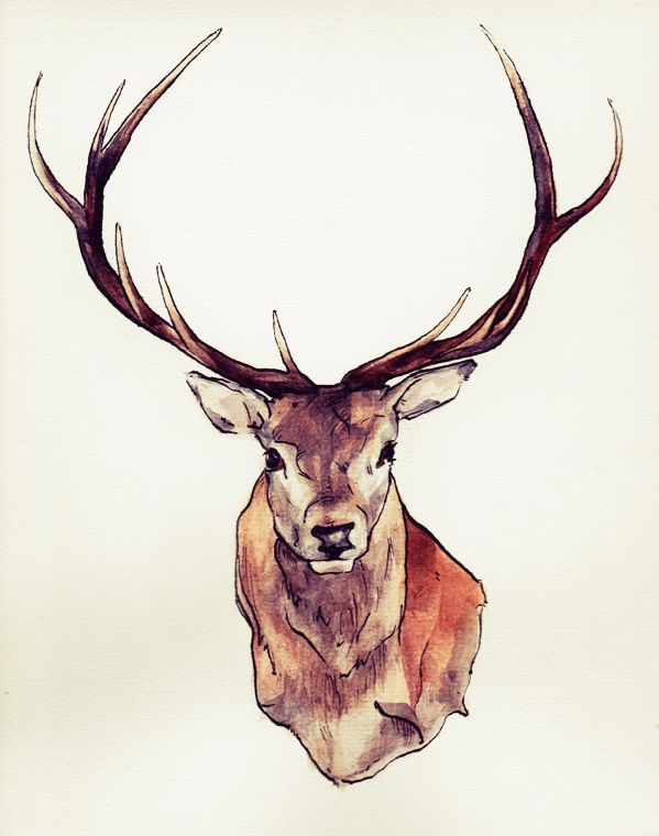 stag drawing | Which one is better? I'm not so sure any more. They're available ...