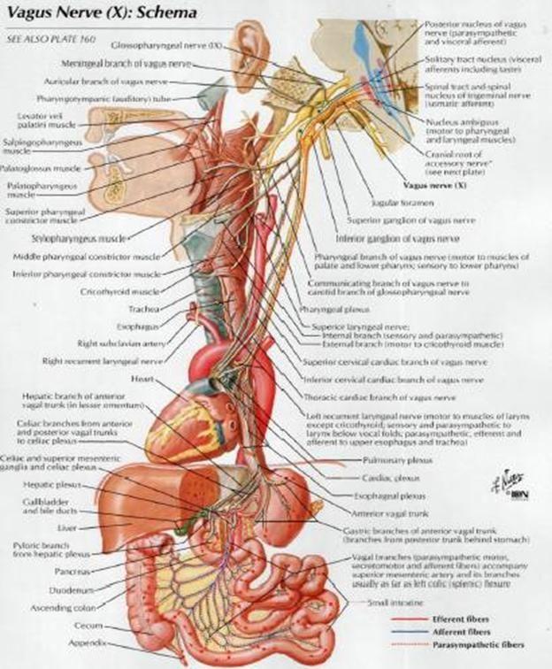 12 best anatomy of wrist images on pinterest