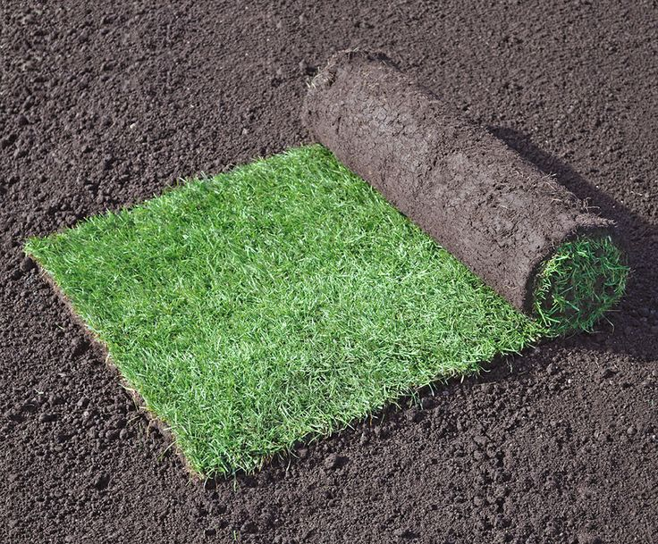 Emerald Lawn Turf - Turf - Stewarts Turf