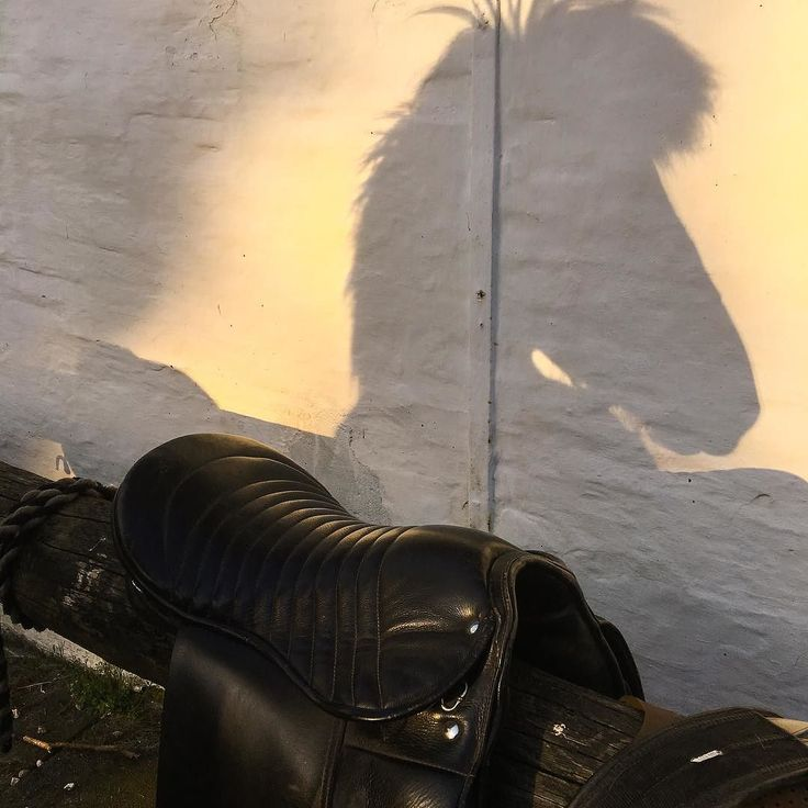 #evening #ride in the late sun. #icelandichorse #shadow #horse